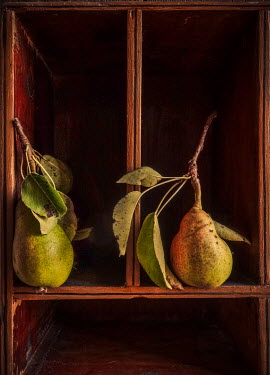 Jane Morley TWO PEARS IN WOODEN CUPBOARD Miscellaneous Objects