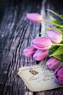Des Panteva OLD LETTER AND PURPLE TULIPS Flowers