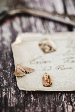 Des Panteva OLD LETTER AND DEAD MOTHS Miscellaneous Objects