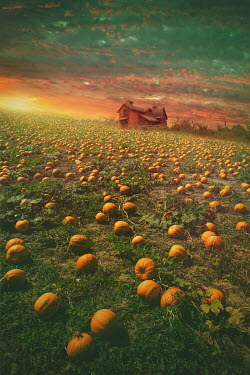 Elena Schweitzer HOUSE WITH FIELD OF PUMPKINS AT SUNSET Houses