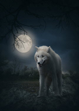 Elena Schweitzer WHITE WOLF IN COUNTRYSIDE WITH MOON Animals