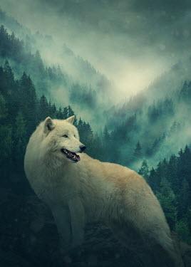 Elena Schweitzer WHITE WOLF WITH MISTY FORESTS Animals