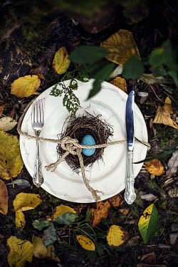 Kelly Sillaste BIRDS NEST ON WHITE PLATE Miscellaneous Objects