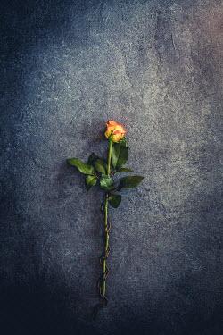 Des Panteva ORANGE ROSE WITH CHAIN WRAPPED AROUND STEM Flowers