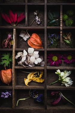 Des Panteva MISCELLANEOUS FLOWERS IN DISPLAY CASE Flowers