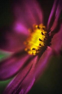 Sally Mundy CLOSE UP OF PURPLE FLOWER Flowers
