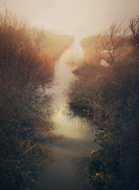 Mark Owen REED FILLED SWAMP Lakes/Rivers