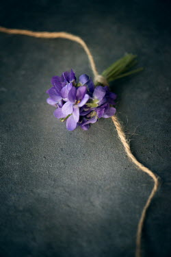 Galya Ivanova BUNCH OF VIOLETS TIED WITH STRING Flowers