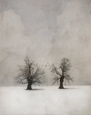 Jamie Heiden TWO TREES IN SNOWY LANDSCAPE Trees/Forest