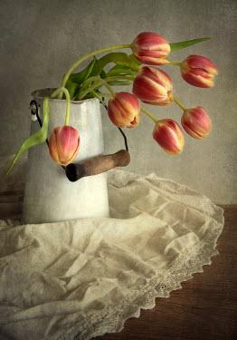 Jaroslaw Blaminsky PINK TLIPS IN JUG WITH WHITE LACE Flowers