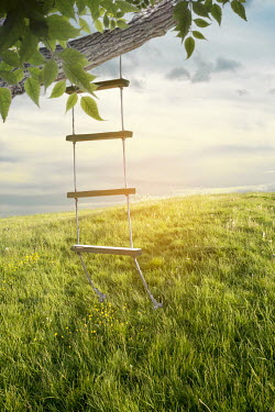 Victoria Davies ROPE LADDER HANGING FROM TREE BRANCH Fields