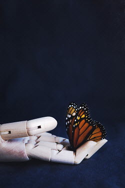 Isabelle Lafrance HAND OF MANNEQUIN HOLDING BUTTERFLY Insects