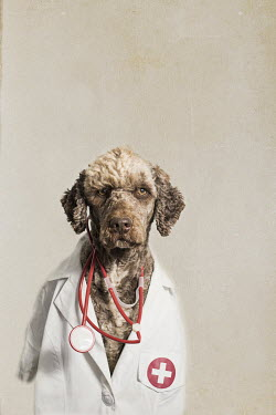 Alessandra Favetto Dog in doctor's uniform Animals