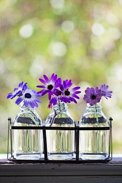 Alison Archinuk Purple flowers in glass bottles Flowers