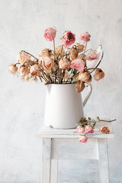 Magdalena Wasiczek WITHERED PINK ROSES IN JUG ON TABLE Flowers