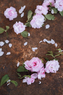 Magdalena Wasiczek PINK FLOWERS SCATTERED ON RUSTY SURFACE Flowers
