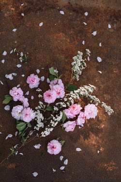Magdalena Wasiczek PINK AND WHITE FLOWERS SCATTERED ON RUSTY SURFACE Flowers