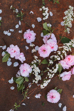 Magdalena Wasiczek PINK AND WHITE FLOWERS ON RUSTY SURFACE Flowers