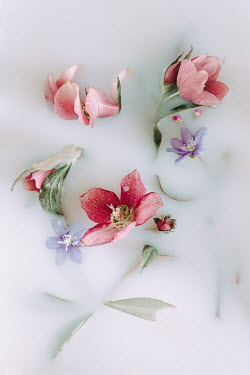 Magdalena Wasiczek PINK AND BLUE FLOWERS IN MILKY WATER Flowers