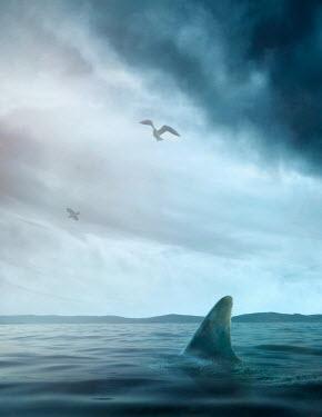 Drunaa SHARK FIN IN SEA Fish