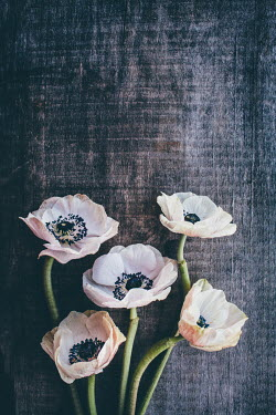 Susan O'Connor WHITE ANEMONES ON WOODEN SURFACE Flowers