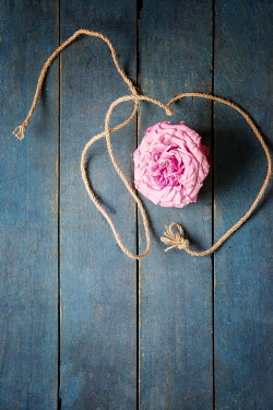 Galya Ivanova Rope and a pink flower Flowers