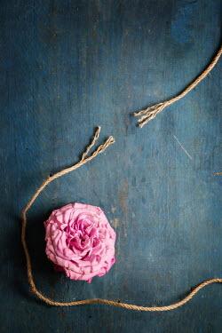 Galya Ivanova Pink flower and unraveled rope Flowers