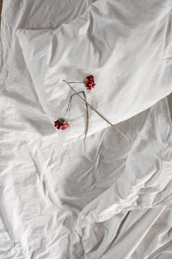 Maria Petkova withered red flowers on bed Flowers