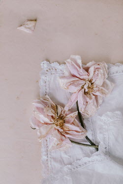 Magdalena Wasiczek WITHERED ROSES IN WHITE LACY HANDKERCHIEF Miscellaneous Objects