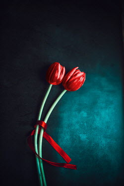 Ildiko Neer Close up of red tulips