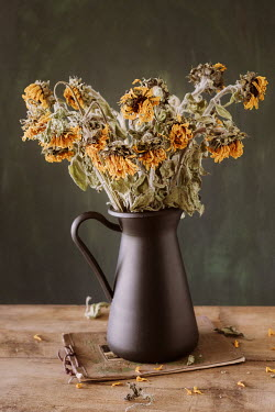 Magdalena Wasiczek WITHERED FLOWERS IN JUG ON NOTEPAD Flowers