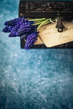 Des Panteva Purple flowers and box of letters Flowers
