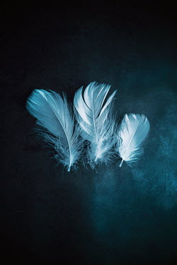 Ildiko Neer Close up three feathers Miscellaneous Objects