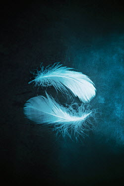Ildiko Neer Close up of two feathers Miscellaneous Objects