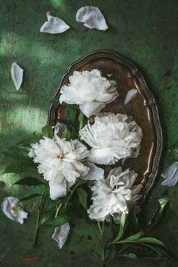 Magdalena Wasiczek White flowers on metal tray Flowers