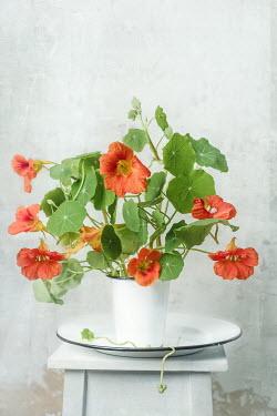 Magdalena Wasiczek Bunch of orange flowers in white vase Flowers