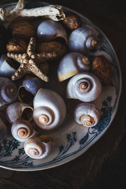 Magdalena Wasiczek SHELLS AND STARFISH ON PLATE Miscellaneous Objects