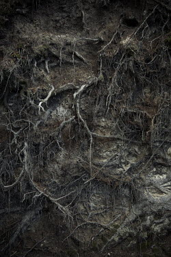 Robin Macmillan CLOSE UP OF ROOTS IN SOIL Flowers/Plants