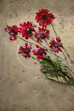 Magdalena Wasiczek RED WITHERED FLOWERS ON METAL Flowers