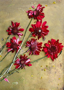 Magdalena Wasiczek WITHERED FLOWERS LYING ON METAL Flowers