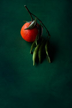 Maria Petkova ORANGE ON GREEN BACKGROUND Miscellaneous Objects