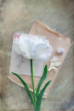 Magdalena Wasiczek WHITE FLOWER AND OLD ENVELOPE Flowers