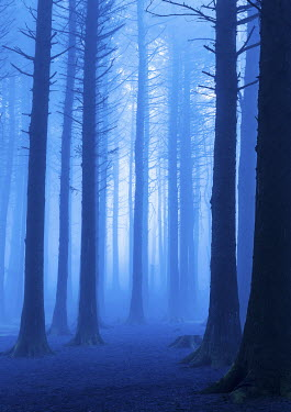Tim Gartside MISTY BLUE FOREST Trees/Forest