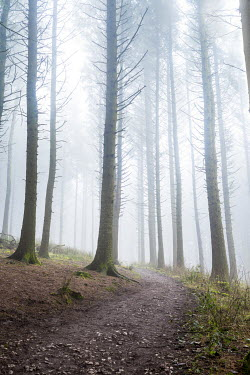 Tim Gartside FOOTPATH THROUGH MISTY FOREST Paths/Tracks