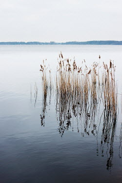 Manuela Deigert CALM LAKE WITH REEDS Lakes/Rivers