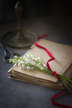 Galya Ivanova WHITE FLOWERS ON OLD JOURNAL Flowers