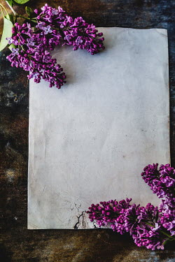 Des Panteva BLANK PAPER WITH PURPLE FLOWERS ON TABLE Flowers