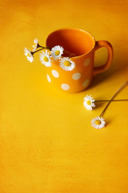 Maria Petkova DAISIES AND SPOTTY ORANGE MUG Flowers