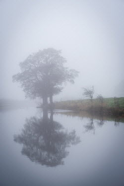 Tim Gartside MISTY LAKE WITH TREE IN WINTER Lakes/Rivers