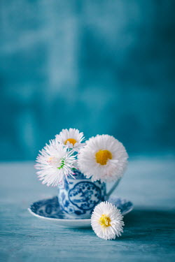Magdalena Wasiczek FOUR FLOWERS IN CHINA CUP Flowers
